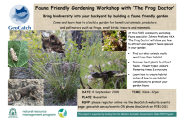 Workshop with 'The Frog Doctor'