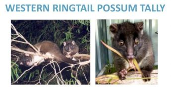 Western Ringtail Possum Tally