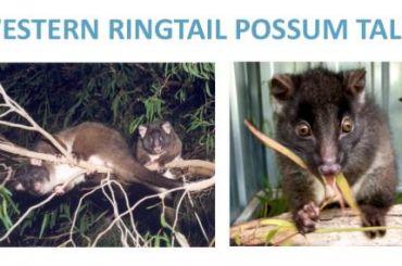 Western Ringtail Possum Tally